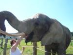 Elefant wird gefüttert.