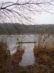 Gräser am Groß Labenzer See