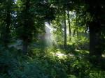 Sonnenlicht fällt in den Wald in Friedrichswalde