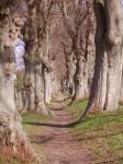Wanderweg zwischen Bäumen