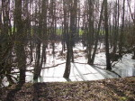 Winterbild im Wald