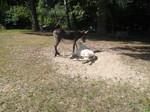 Paula und Luna unsere Esel
