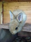 Kaninchennachwuchs