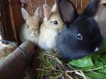 Drei süße, junge Kaninchen
